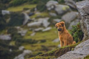 Cute Dog in Hills